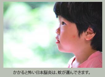 かかると怖い日本脳炎は、蚊が運んできます。